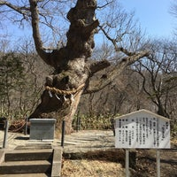 Photo taken at 温泉神社御神木 by のうや く. on 3/25/2017