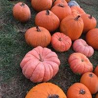 Photo taken at Pumpkin Patch by Elvyra M. on 10/22/2017
