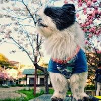 Photo taken at 須磨寺公園 by 虎太郎 &. on 4/23/2017