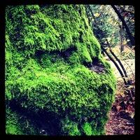 Das Foto wurde bei Woodland Park von Ross G. am 11/28/2012 aufgenommen