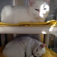 Photo taken at Northeast Animal Shelter by Ian H. on 4/25/2014