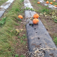 Photo taken at Cat And Fiddle Strawberry Fields by Thor E. on 10/27/2013
