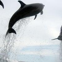 Photo taken at Port of Nagoya Public Aquarium by moran_bo on 8/31/2013