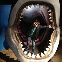 Photo taken at SEA LIFE Melbourne Aquarium by 🅱eNNy ♋. on 10/6/2012