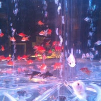 Photo taken at Japan Premium Dining きん魚 by Lilly O. O. on 10/5/2012