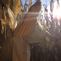 Photo taken at Beans & Greens Farmstand by Lani V. on 10/20/2012