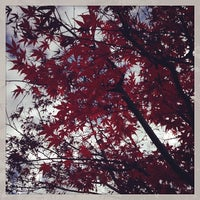 Photo taken at 蛇崩緑道 by JONO on 12/10/2013