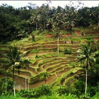 Снимок сделан в Tegallalang Rice Terraces пользователем Anton B. 3/4/2013
