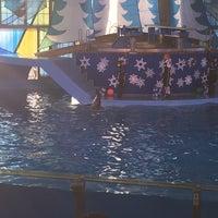 Photo taken at Nautilus Amphitheater at SeaWorld by Avinash S. on 12/31/2016