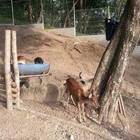 Photo taken at Mini Zoo Taman Teruntum by Kimmie H. on 7/5/2014