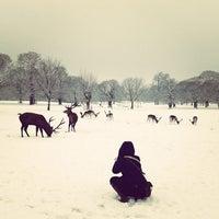 Снимок сделан в Wollaton Hall & Deer Park пользователем Simon C. 1/21/2013