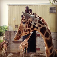 Photo taken at Dickerson Park Zoo by Tim S. on 7/4/2013