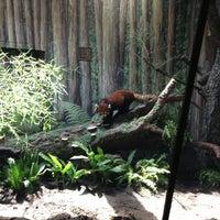 6/5/2013 tarihinde Lunaziyaretçi tarafından Red Panda Habitat'de çekilen fotoğraf