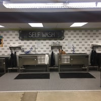Petco dog wash famous dog 2018 unleashed by petco you 10 self solutioingenieria Choice Image