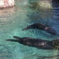 Photo taken at Oregon Coast Aquarium by Josh K. on 10/3/2012