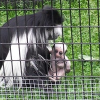 Photo taken at Lake Superior Zoo by April H. on 7/21/2013