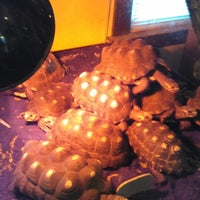 Photo taken at Reptiles & Things Reptile Emporium by Zeus on 7/6/2014