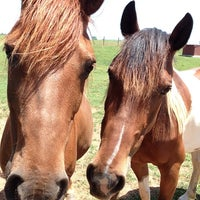 Photo taken at New Horizons Equine Specialists by Copeland C. on 5/31/2014