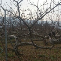 Photo taken at 古畑古墳 by fomalhaut 1. on 1/17/2014