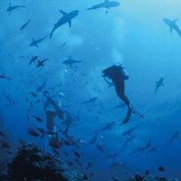 Photo taken at Seamonkey Dive Centre by Daniel D. on 10/14/2013