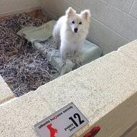 Photo taken at Atlanta Humane Society by Aziz A. on 8/15/2013