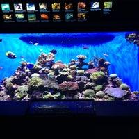 Photo taken at Birch Aquarium At Scripps Institution of Oceanography by Josie L. on 11/3/2012