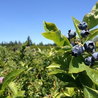 Photo taken at Blueberry Farm by Darcy A. on 7/10/2013