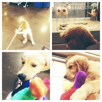 Photo taken at PetSmart by Christina G. on 6/7/2013