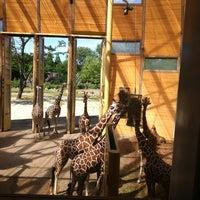 Photo taken at Giraffen by Grrko on 7/29/2013