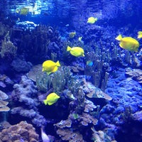 Photo taken at Maui Ocean Center, The Hawaiian Aquarium by Laura M. on 3/6/2013