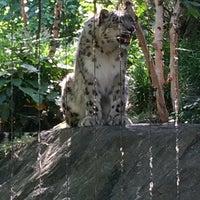 6/22/2016 tarihinde Robert M.ziyaretçi tarafından Central Park Zoo - Snow Leopard'de çekilen fotoğraf