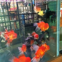 Photo taken at Onn Lok Koi Centre (important Japanese koi & Thai/china goldfish) by Shin C. on 5/17/2014