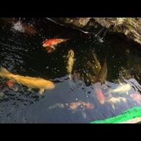 Photo taken at Onn Lok Koi Centre (important Japanese koi & Thai/china goldfish) by Shin C. on 5/16/2014