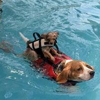 Foto tomada en Sa-by-jai Dog Swimming Pool por Somrutai S. el 7/6/2014