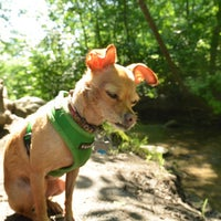 Das Foto wurde bei Central Park - North Woods von David B. am 6/29/2013 aufgenommen