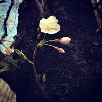 Photo taken at 大橋通り by Norio N. on 3/25/2013
