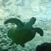 Photo taken at Ripley's Aquarium by Patrick B. on 3/17/2014