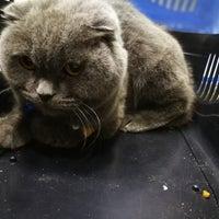 12/16/2017 tarihinde Bertug A.ziyaretçi tarafından Pet Clinic'de çekilen fotoğraf