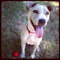 Photo taken at City of Sacramento Animal Care Services Shelter by Becky C. on 7/5/2013