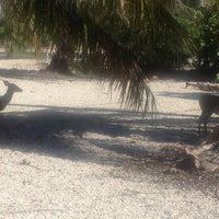 Photo taken at Big Pine Key by Marci C. on 11/22/2012