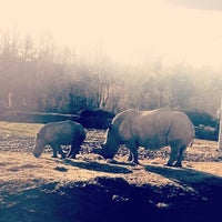 Photo taken at Colchester Zoo by Gemma G. on 1/12/2014