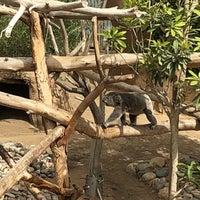 6/29/2018 tarihinde Jeff V.ziyaretçi tarafından Koala Exhibit'de çekilen fotoğraf