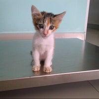 Photo taken at Animal clinic & surgery by Pakngah S. on 11/10/2013