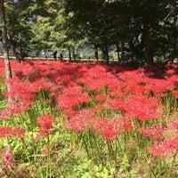 Photo taken at Kinchakuda Manjushage Park by じゅんじ on 10/1/2017
