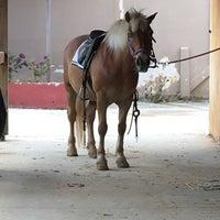 Photo taken at Ιππικος Ομιλος Μαραθωνα by Mileni L. on 4/22/2017