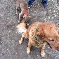 """11/17/2013에 Didem """"Didi"""" O.님이 Owls Head Dog Park에서 찍은 사진"""