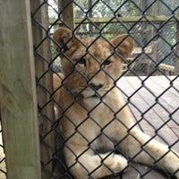 Photo taken at Zoo World by Amanda C. on 12/14/2012