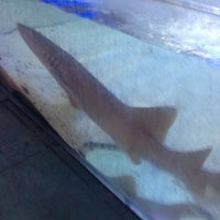 Photo taken at lucky ocean aquarium by Nicholaus B. on 1/9/2013