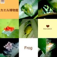 Photo taken at Frog Pond of Monteverde by Nobunari O. on 2/10/2015