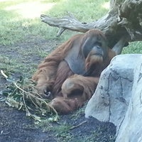 "Photo taken at Monkey Trail by ""ScOrPiO LeE"" on 11/9/2013"